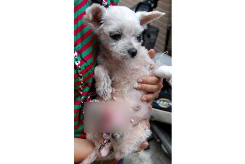 (图片提供/台湾动物紧急救援小组)