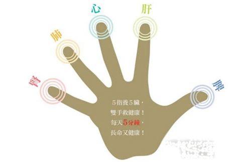 中醫理論「5指通5臟」,意即人的5指從大母指、食指、中指、無名指到小指,依序掌理脾、肺、心、肝、腎5大臟器。