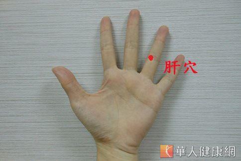 穴位示意圖:肝穴。(圖片/華人健康網)
