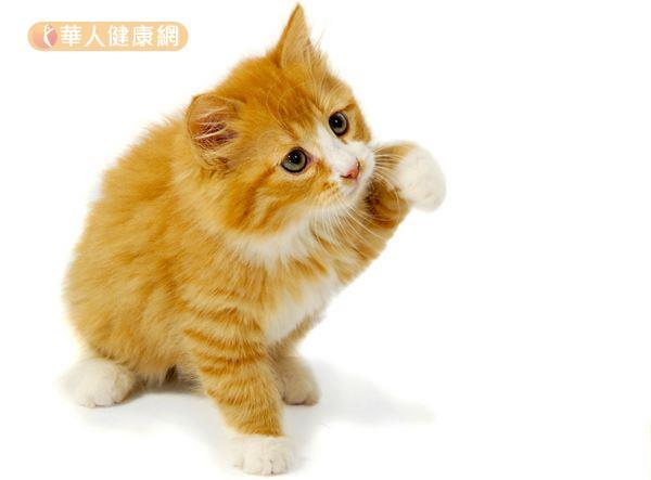 赶走瞌睡虫!可爱猫咪影片也有用