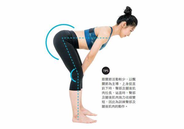 羅馬尼亞式硬舉,膝關節活動較少,主要以髖關節為主導。姿勢為上身挺直趴下時,臀部及腿後肌肉拉長;站直時,臀部及腿後肌肉施力收縮變短。(圖片/三采文化提供)