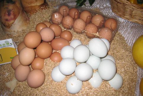 蛋殼、蛋黃顏色,並不能完全代表雞蛋營養。(攝影/駱慧雯)