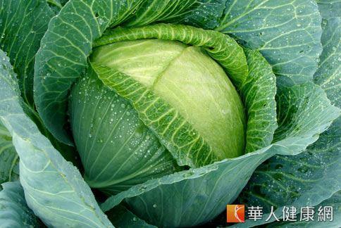 甘藍菜就是俗稱的高麗菜,營養價值豐富,有「菜中人參」的美譽,近年來更被發現具有防癌的功效。