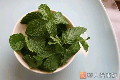 薄荷有特殊沁涼香氣,有助改善夏季頭痛。(攝影/江旻駿)