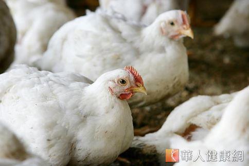 中國人認為雞隻有滋補的保健功效,而西方營養學則認為不同部位有不同的營養價值。