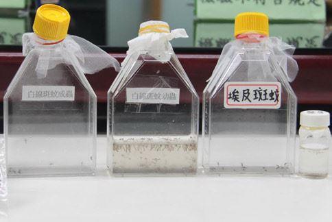 登革熱病媒蚊之蟲卵、幼蟲和蛹。(圖片提供/台北市衛生局)