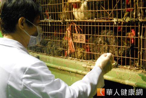 國內爆發歷年來最大規模鴨鵝禽流感疫情,地方政府展開嚴格稽查。