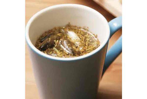中醫師陳峙嘉在其新書《時尚養生帖》中建議,流鼻水鼻塞也可以飲用「清鼻茶」來緩解。(圖片提供/陳峙嘉中醫師)