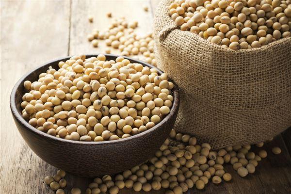 黃豆含有豐富的優質蛋白質,建議癌友適量攝取,幫助細胞修復。