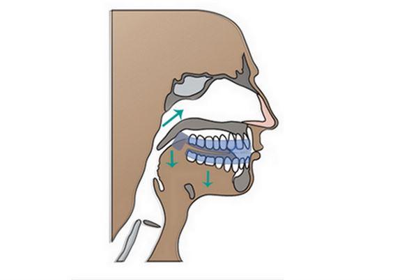 訓練鼻呼吸,引導呼吸氣流從鼻腔出入,使口咽軟組織不受擾動。