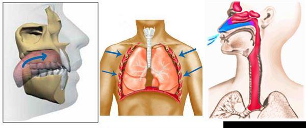 輕慢地鼻吸、鼻呼,速度不拘,用自己最舒服的節奏呼吸。