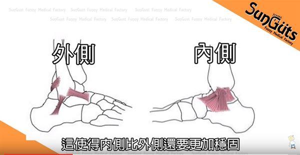 腳踝內側韌帶數量較多,分佈也較集中,這使得腳踝內側比外側更加穩固。(圖片/擷取自Sunguts youtube影片)