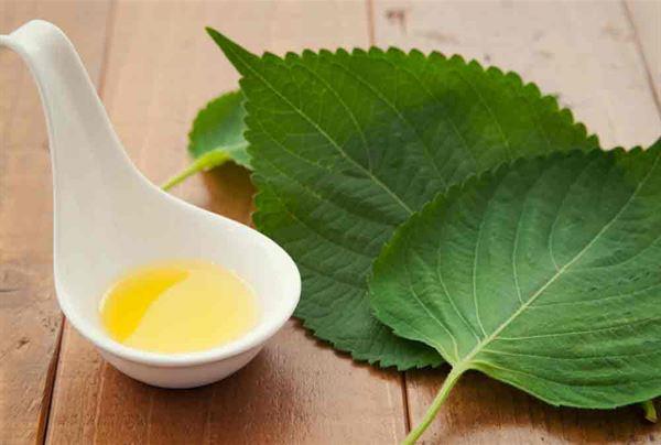 冬天發生輕微感冒的初期,建議服用【紫蘇甘草茶】來調理。
