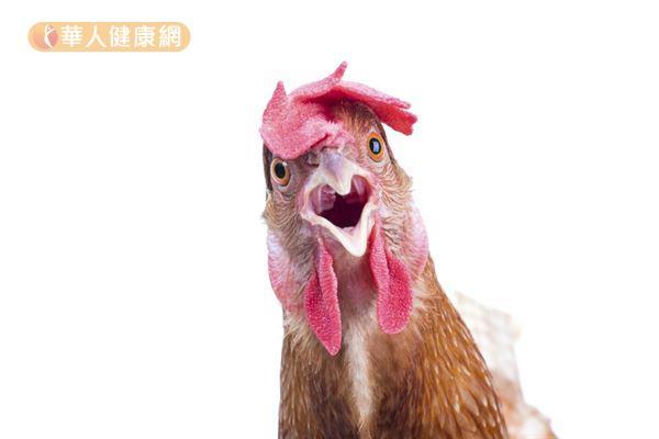 不是所有雞肉都屬於白肉?