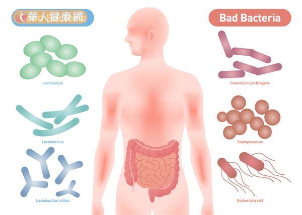 寡糖有助於調整腸道環境,提高益生菌的數量並抑制壞菌的增生。