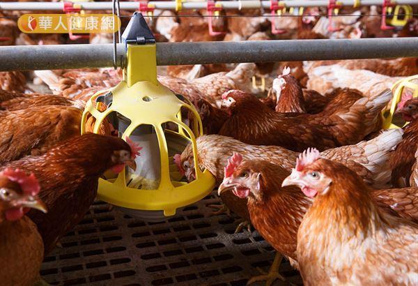 民眾只要有正確防範禽流感觀念,以及維持良好衛生習慣,不需要過度擔心。