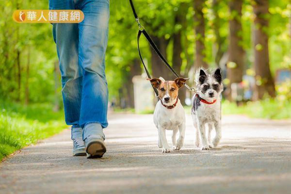 研究發現,有養狗的年長者因常常遛狗,整體活動量較多。