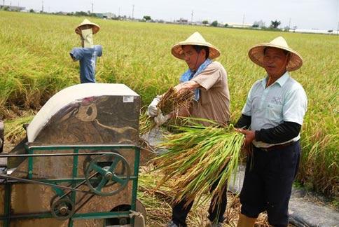農民防中暑五部曲:躲、補、勤、要、保 | 焦點特報 | 華人健康網